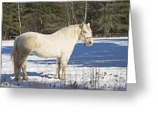 White Horse In Winter Maine Greeting Card