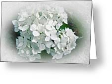 White Hydrangea Greeting Card