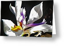White Iris  Greeting Card by Daniele Smith