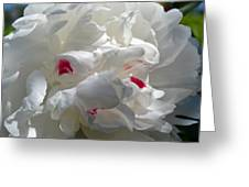 White Lady Greeting Card