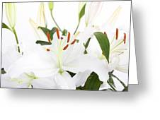 White Lilies And Background Greeting Card