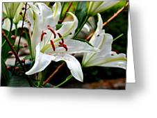 Mother's Day  Lilies  Greeting Card
