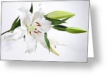 White Lily And Buds Greeting Card