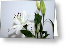 White Lily With Buds Greeting Card