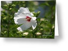 White Linen Greeting Card