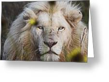White Lion And Yellow Flowers Greeting Card
