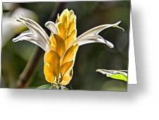 White Mixed With Yellow Greeting Card