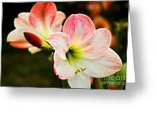 White N Pink Greeting Card