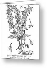 White Nettle Greeting Card