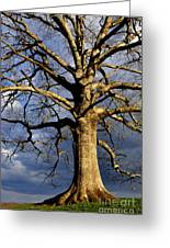 White Oak And Storm Clouds Greeting Card by Thomas R Fletcher
