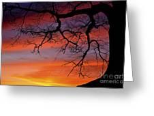 White Oak Sunrise Greeting Card
