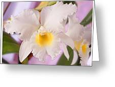 White Orchid Greeting Card by Mike McGlothlen