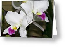 White Orchid Of Taiwan Greeting Card