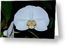 White Orchids 006 Greeting Card