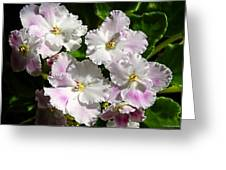 White Pink Ruffled Violet Greeting Card