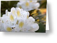 White Rhododendron Bloom Greeting Card
