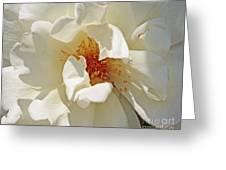 White Rose Stemens Greeting Card