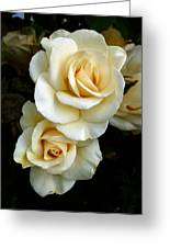 White Roses Greeting Card