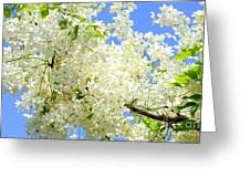 White Shower Tree Greeting Card