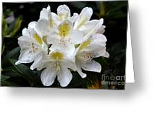 White Simplicity Greeting Card