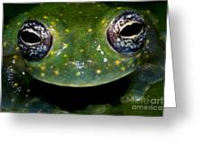 White Spotted Glass Frog Greeting Card