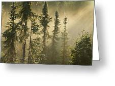 White Spruce In Mist At Sunrise Greeting Card