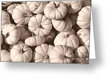 White Squash Greeting Card