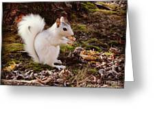 White Squirrel With Peanut Greeting Card