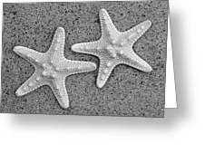 White Starfish In Black And White Greeting Card