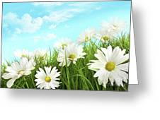 White Summer Daisies In Tall Grass Greeting Card