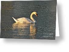 White Swan At Sunset Greeting Card