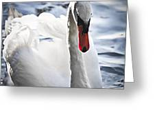 White Swan Greeting Card by Elena Elisseeva