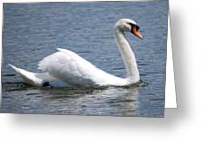 White Swan On A Lake Greeting Card