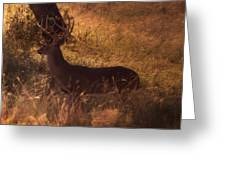 White Tail Buck Greeting Card