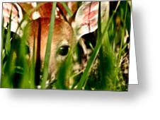 White Tailed Deer Fawn Hiding In Grass Greeting Card