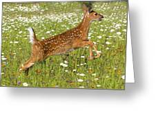 White Tailed Deer Fawn In Field Of Greeting Card