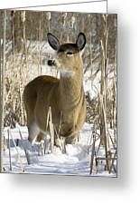 White-tailed Deer In A Snow-covered Greeting Card