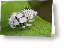 White Treehopper Nymph Greeting Card