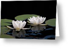 White Water-lily 8 Greeting Card
