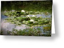White Water Lily Pond Greeting Card