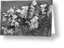 White Wild Flowers B W Greeting Card