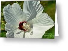 White Wildflower I Greeting Card