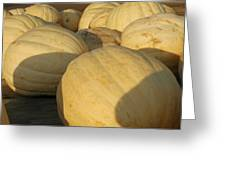 White Yellow Pumpkins Greeting Card