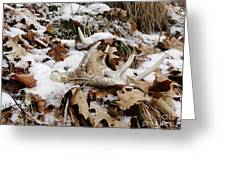 Whitetail Deer Antler  - Half Of 10 Greeting Card
