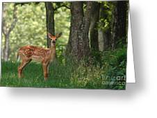 Whitetail Deer Fawn Greeting Card