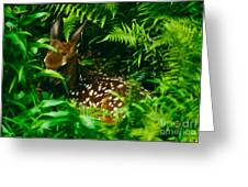 Whitetail Fawn And Ferns Greeting Card