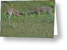 Whitetail Fighting_9668 Greeting Card