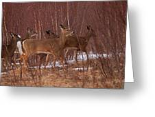 Whitetails On The Move Greeting Card