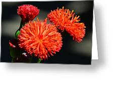 Who Flower Greeting Card
