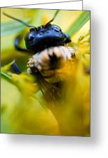 Who Knew Bees Have Mustaches Greeting Card by Beth Akerman